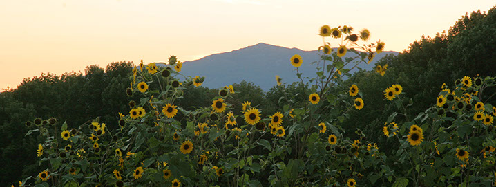 Mount Monadnock from Rosalie's Garden, NH's oldest organic farm.    Photo © Annie Card